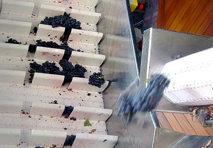 conveyor belts for wine industry
